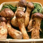 「マツタケづくしの鍋」の段