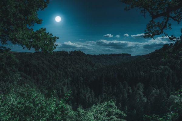 夜】夜を日に継ぐ、小夜曲、夜気、虫時雨、夜鶴 | 毎日ことば